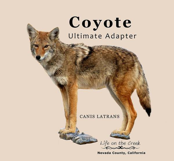 Digital Art - Coyote Ultimate Adaptor by Lisa Redfern
