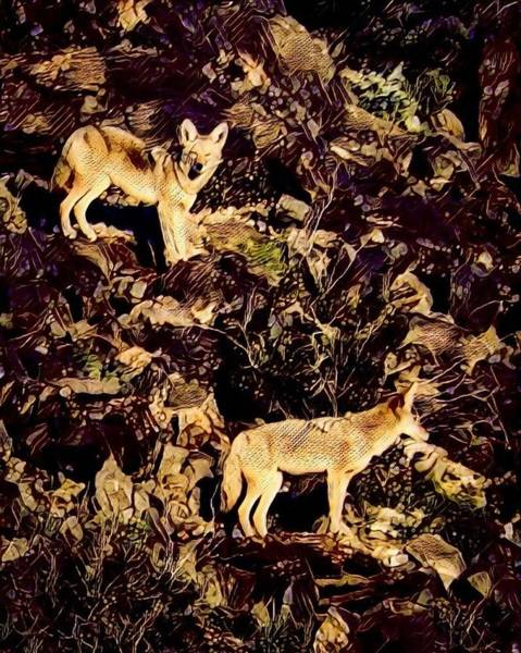 Photograph - Coyotes On Hillside by Judy Kennedy