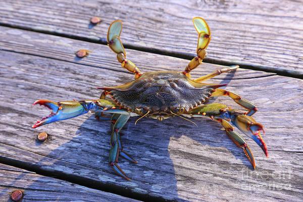 Wall Art - Digital Art - Crab On The Dock by Randy Steele