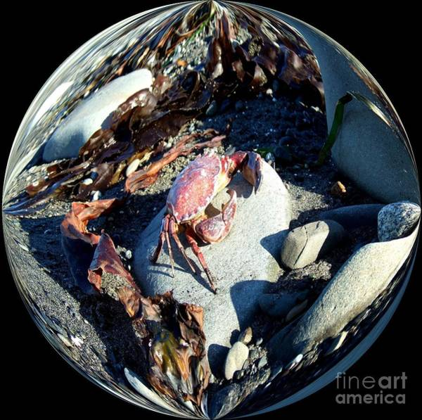 Photograph - Crab, Rocks And Seaweed In A Bubble by Delores Malcomson