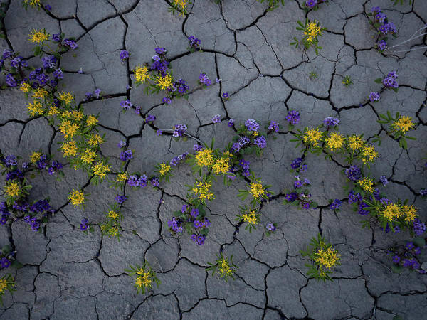Photograph - Cracked Blossoms by Emily Dickey
