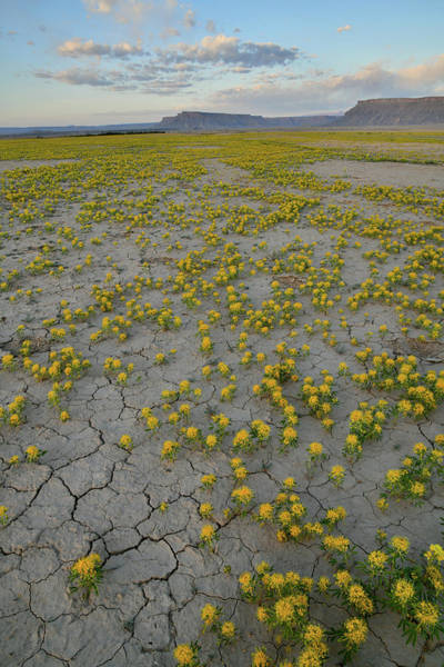 Photograph - Cracked Earth And Super Bloom At Factory Butte In Utah by Ray Mathis