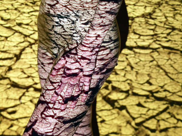Cracked Photograph - Cracked Earth Over Woman, Mid Section by Daniel Day