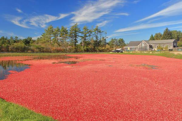 Wall Art - Photograph - Cranberry Bog Harvest Color by John Burk
