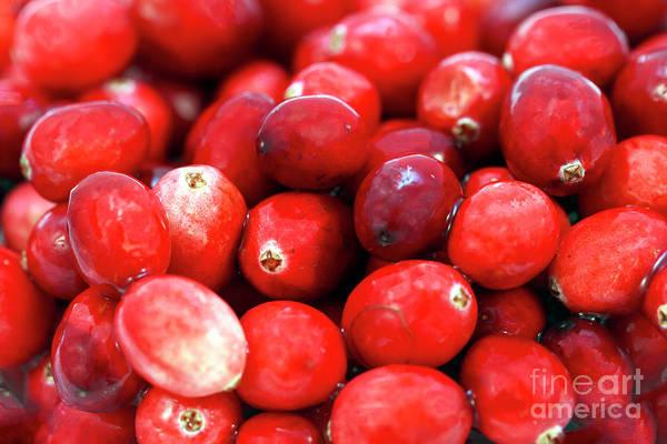 Photograph - Cranberry Pile by John Rizzuto