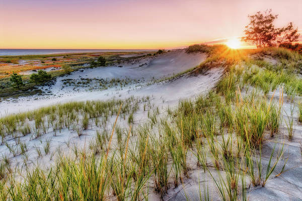 Photograph - Crane Beach, Dune Grass Sunrise  by Michael Hubley