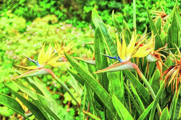 Photograph - Crane Flowers by JAMART Photography