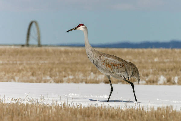 Photograph - Crane by Ronnie and Frances Howard