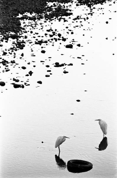 Photograph - Cranes by Björn Neumann