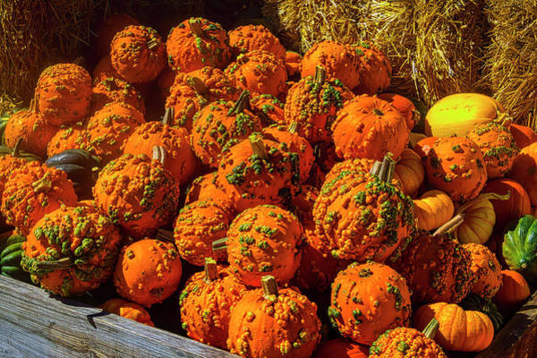 Wall Art - Photograph - Crate Full Of Warty Pumpkins by Garry Gay
