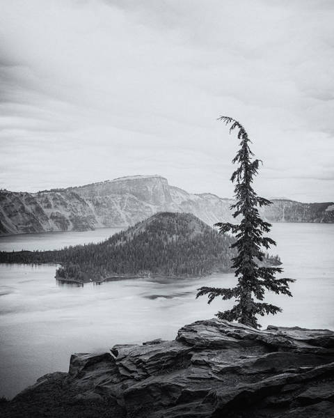 Crater Lake Photograph - Crater Lake Pine by Joseph Smith
