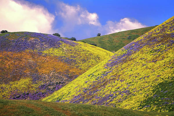 Photograph - Crazy Colors On The Carrizo - Superbloom 2017 by Lynn Bauer