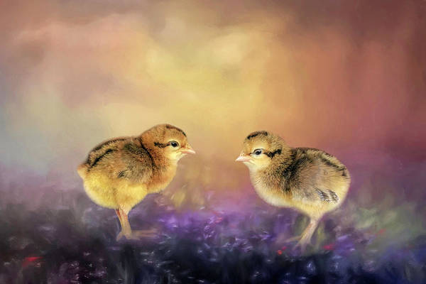 Just Birds Photograph - Cream Legbar Chicks by Donna Kennedy
