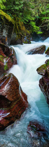 Wall Art - Photograph - Creek Flowing Through Forest, Avalanche by Panoramic Images