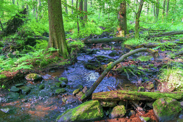 Photograph - Creek In A Forest In Vogelsberg by Sun Travels
