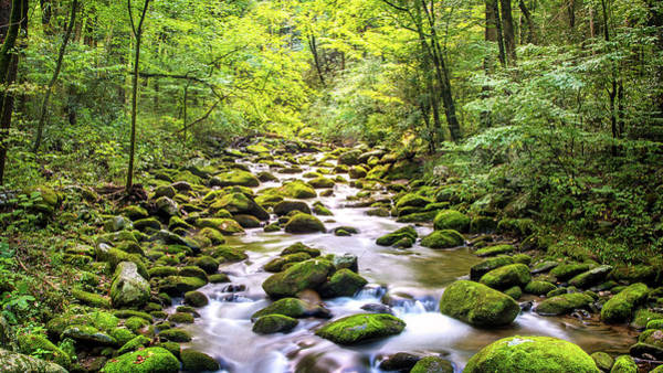 Wall Art - Photograph - Creek Running Through Roaring Fork In Smoky Mountains by Susan Schmitz