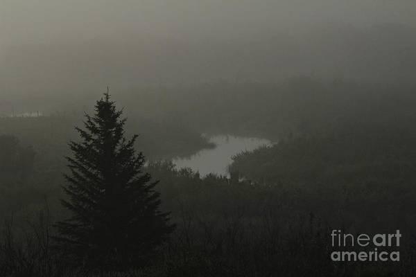 Photograph - Creek Unveiled by Ann E Robson