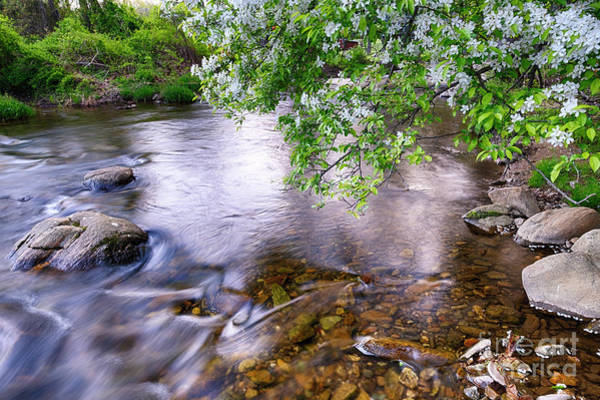 Wall Art - Photograph - Creek With A Blooming Tree by George Oze