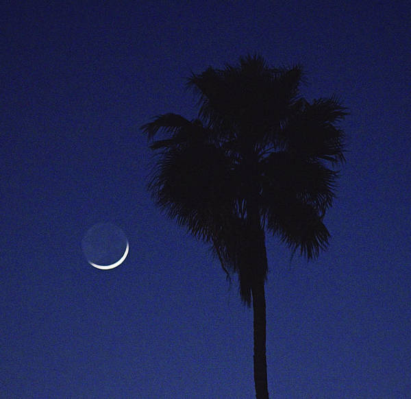 Photograph - Crescent Moon And Palm Tree by Chance Kafka