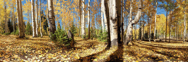 Wall Art - Photograph - Crested Butte Colorado Fall Colors Panorama - #2 by OLena Art - Lena Owens
