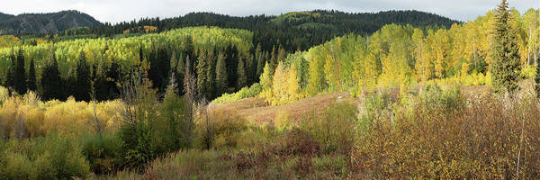 Photograph - Crested Butte Colorado Fall Colors Panorama - 2 by OLena Art Brand