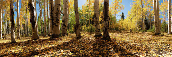 Photograph - Crested Butte Colorado Fall Colors Panorama - 3 by OLena Art Brand