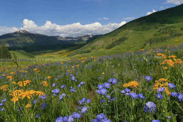 Photograph - Crested Butte Sunny Morning Wildflower Landscape by Cascade Colors