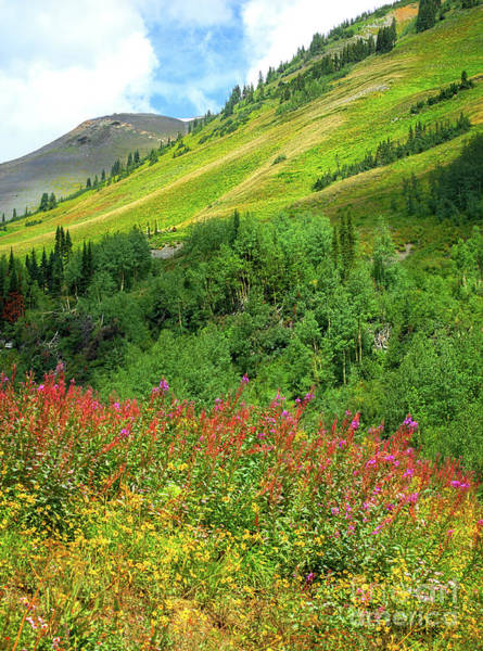Photograph - Crested Butte Wildflowers by Susan Warren