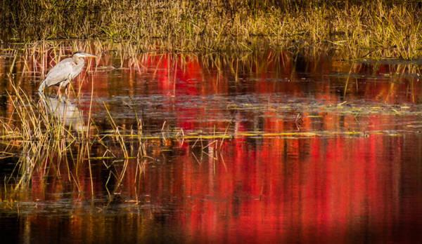 Wall Art - Photograph - Crimson Mornings by Karen Wiles