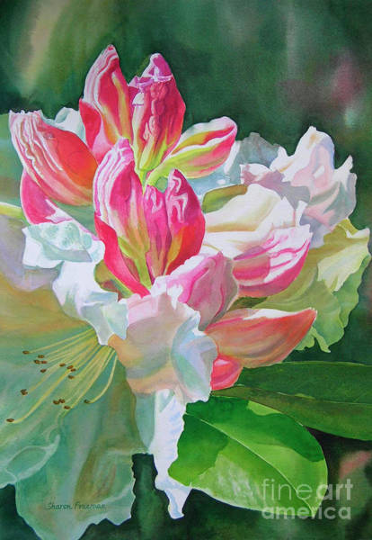 Wall Art - Painting - Crimson Rhododendron Buds by Sharon Freeman