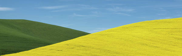 Photograph - Criss Cross Canola by Paul Bruins Photography