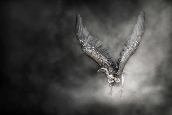 Wing Back Wall Art - Photograph - Critically Endangered White Backed Vulture In The Dust by Susan Schmitz