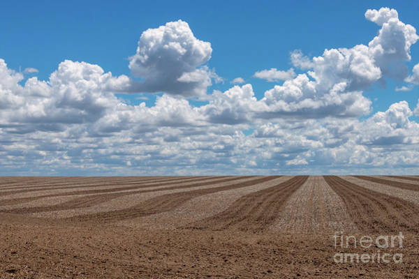 Plowing Photograph - Crop Lines by Mike Dawson