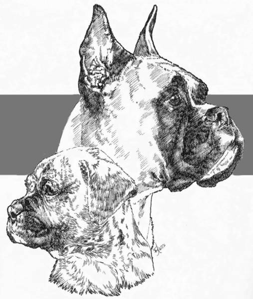 Drawing - Cropped Boxer And Pup by Barbara Keith