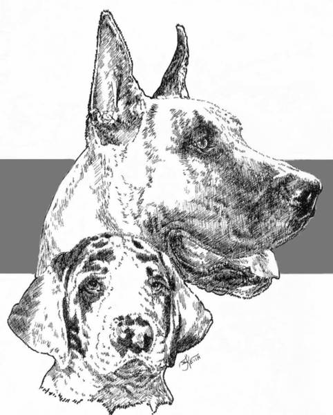 Drawing - Cropped Great Dane And Pup by Barbara Keith