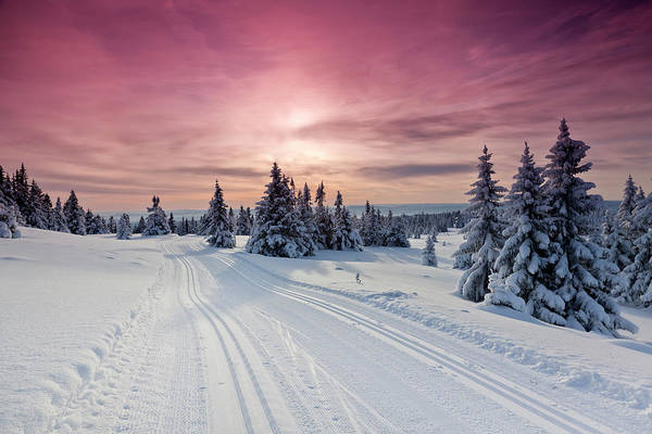 Lillehammer Photograph - Cross Country Ski Tracks At Sunset by Rob Kints
