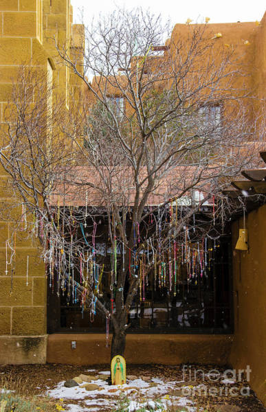 Photograph - Cross Tree by Jon Burch Photography