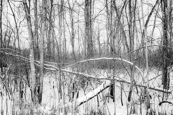 Photograph - Crossbow by Kendall McKernon