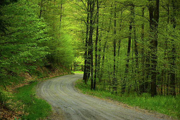 Photograph - Crossing A Forest Service Road In Vt by Raymond Salani III