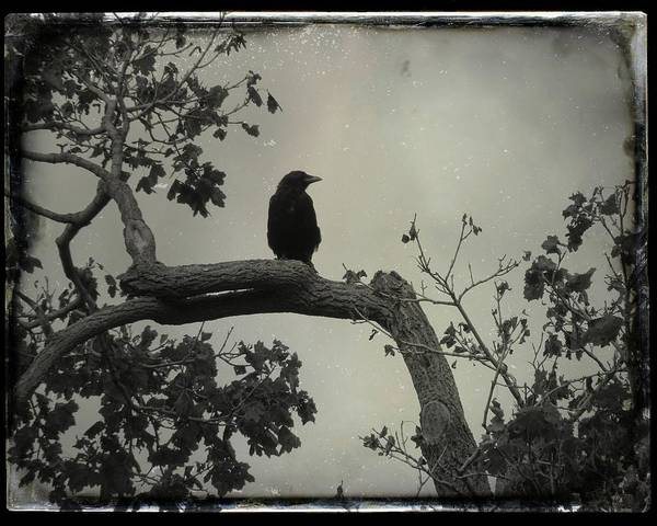 Wall Art - Photograph - Crow Changes A Bleak And Gray Day by Gothicrow Images