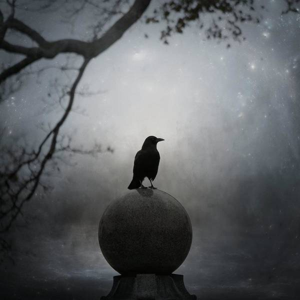 Wall Art - Photograph - Crow Globe by Gothicrow Images