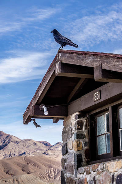 Photograph - Crow Or Raven Perched Up On An Old Hut In Death Valley by Alex Grichenko