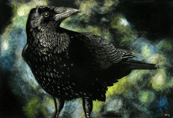 Drawing - Crow by William Underwood