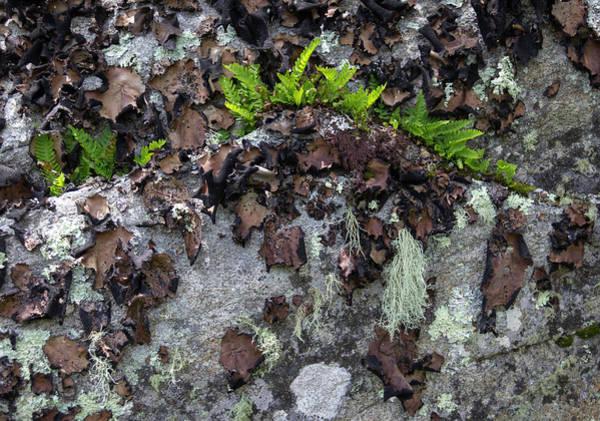 Wall Art - Photograph - Crown Of Ferns by Teresa Mucha