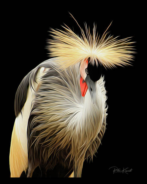 Digital Art - Crowned Crane by Peter Kennett