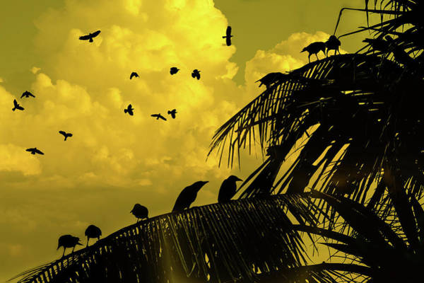 Photograph - Crows In Kandawgyi Park by Chris Lord