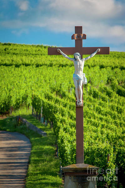 Wall Art - Photograph - Crucifix In Vineyards Of The Grand Cru by Brian Jannsen
