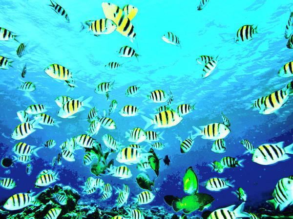 Hawaiian Fish Photograph - Cruising The Reef by Dominic Piperata