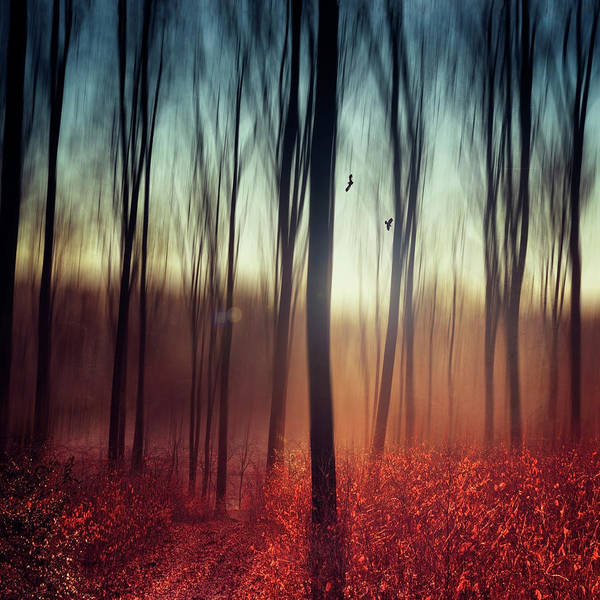 Photograph - Crying Lights - Abstract Forest Scenery by Dirk Wuestenhagen