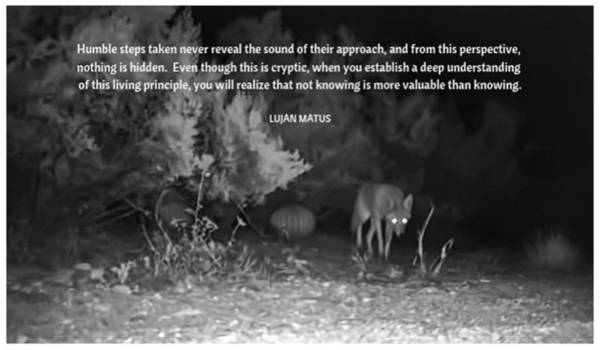 Photograph - Cryptic Coyote by Judy Kennedy
